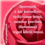 Szeretnék a kis kertedben nyíló rózsa lenni, minden percben illatommal téged körül venni.