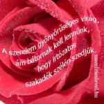 A szerelem gyönyörűséges virág, ám bátornak kell lennünk, hogy irtózatos szakadék szélén szedjük.