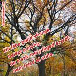Ha fába betűt vésnek, belepi a moha, de a szív mely téged szeret, nem feled el soha.