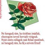 Ne haragudj rám, ha titokban imádlak, elsuttogom neved hervadó virágnak. Nyári estén csillagok csak Rólad mesélnek, ne haragudj rám, ha fáj a szívem Érted!